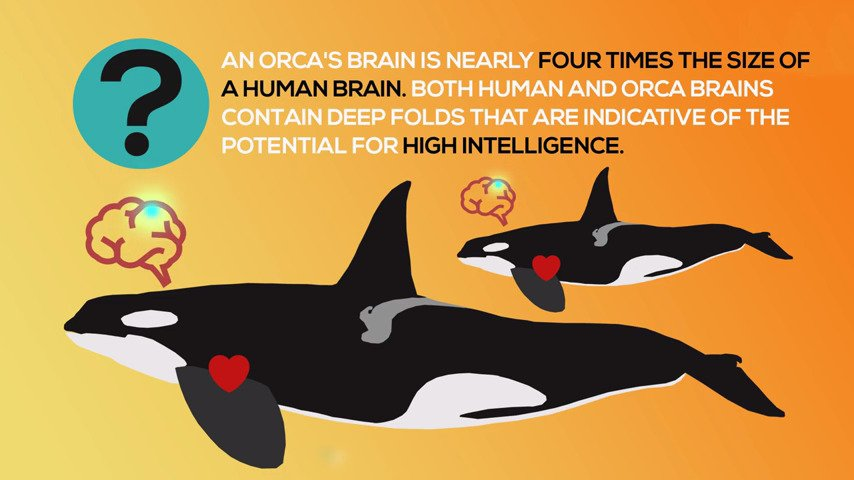 Studios and streamers unite to help save orcas - #GTUSA 2